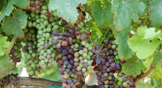 vins-espagne